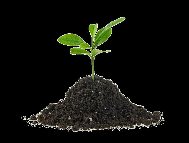GreenDrive kasvi